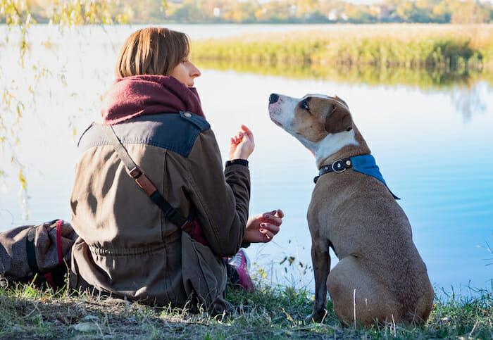 Human communicating with dog